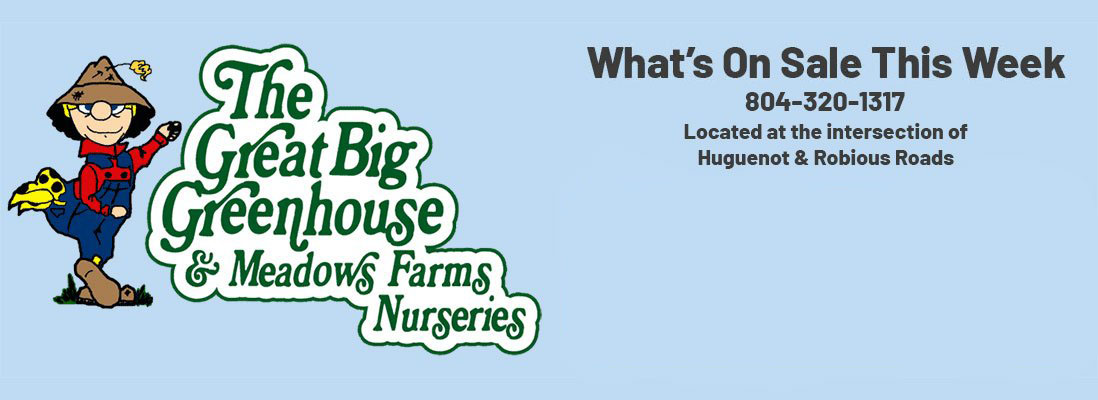 The Great Big Greenhouse and Meadows Farms Nurseries. What's On Sale This Week. 804-320-1317. Located at the intersection of Huguenot and Robiuous Roads.