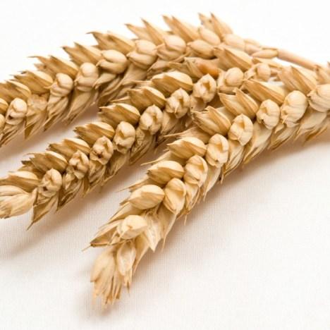 Which grains contain gluten?