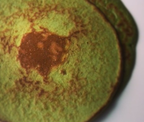 Green wheatgrass protein pancake