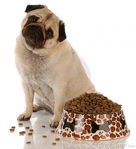 dog-sitting-food-dish-11075035