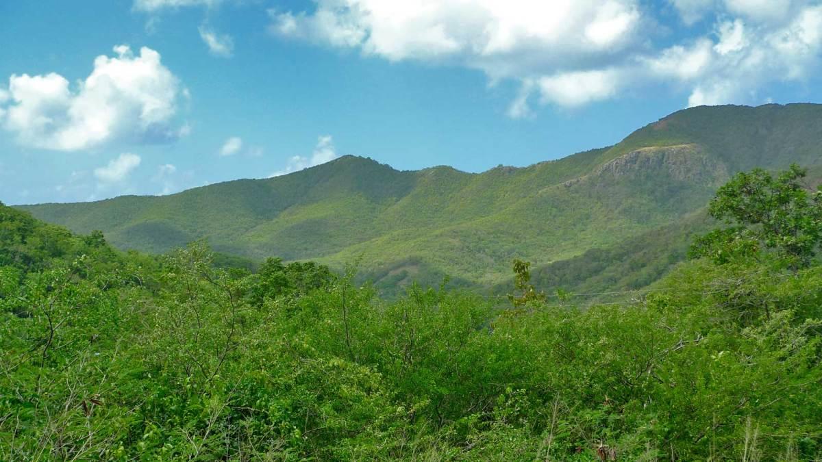 Antigua-rainforest