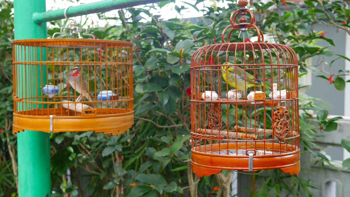 Hong-Kong-bird-garden-2