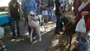 image of great danes