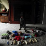 picture of dog with toys
