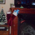 dog and stocking