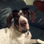 German Shorthaired Poindexter