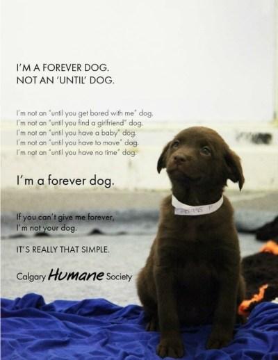 Forever Dog