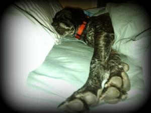 GSP sleeping