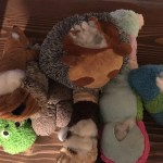 more dog toys
