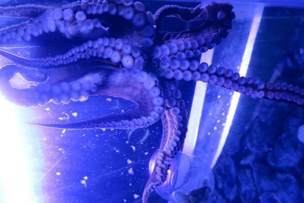 Mistaken Monsters - Greater Cleveland Aquarium