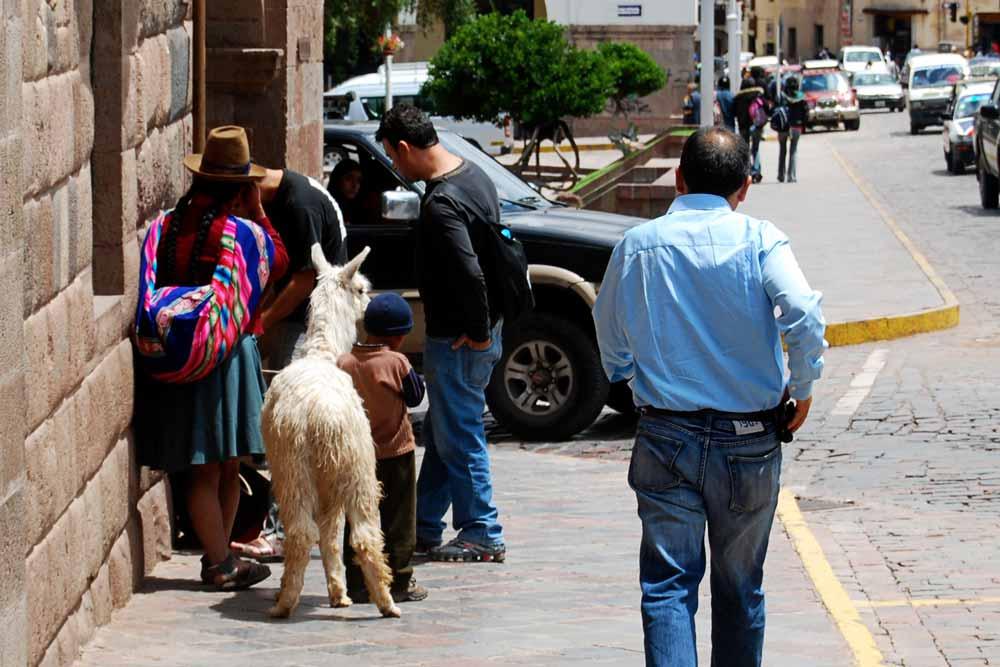 Street Llama