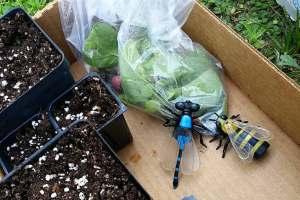 Harris County Master Gardeners Open Garden Days