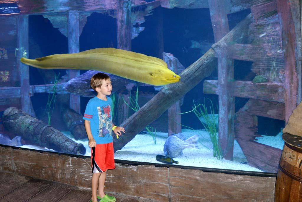 Homeschool Day at Downtown Aquarium - Houston