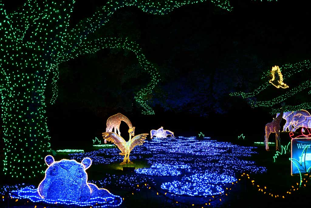 Zoo Lights at the Houston Zoo