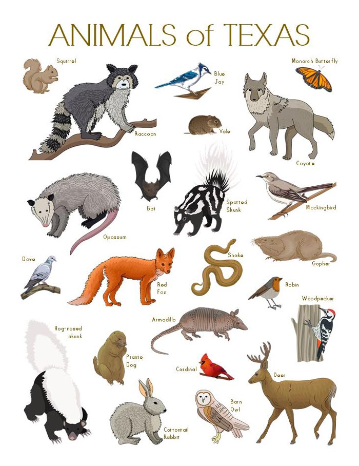 A printable of many common Animals of Texas