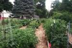 garden-7-23