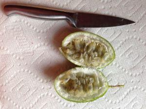 Maypop Plant Information | A Unique Edible Vine Maypop4
