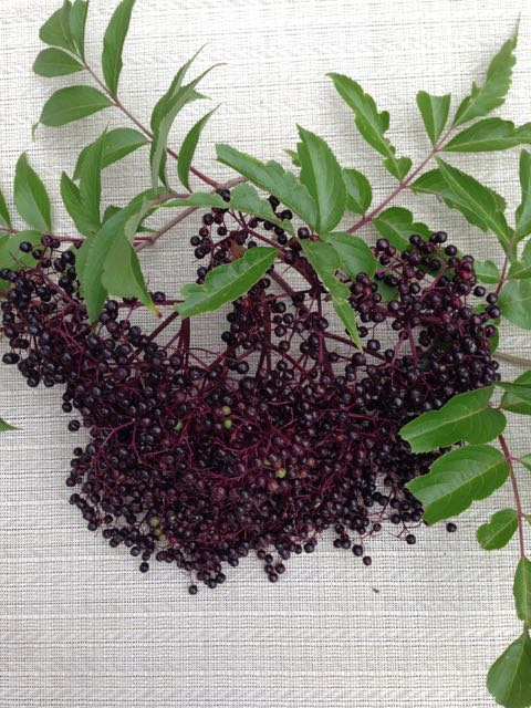 Making Elderberry Syrup