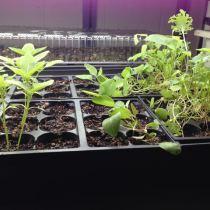 Hardening Off Plants