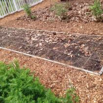 First Square Foot Garden