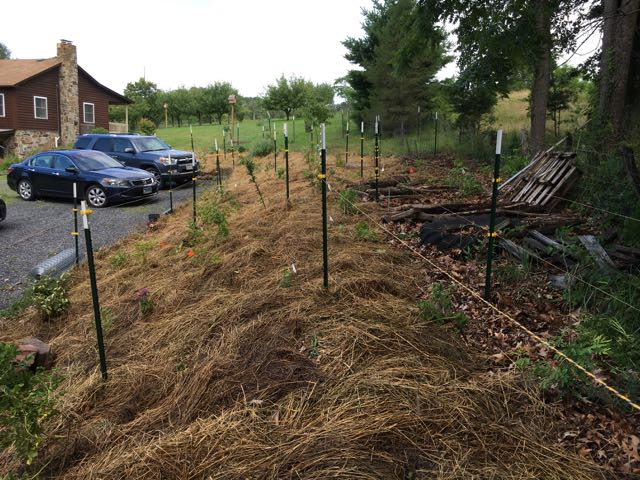 A Budding New Food Forest Update