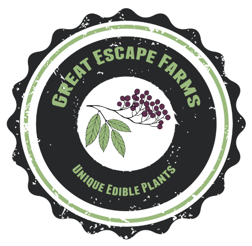 Happy Anniversary Great Escape Farms