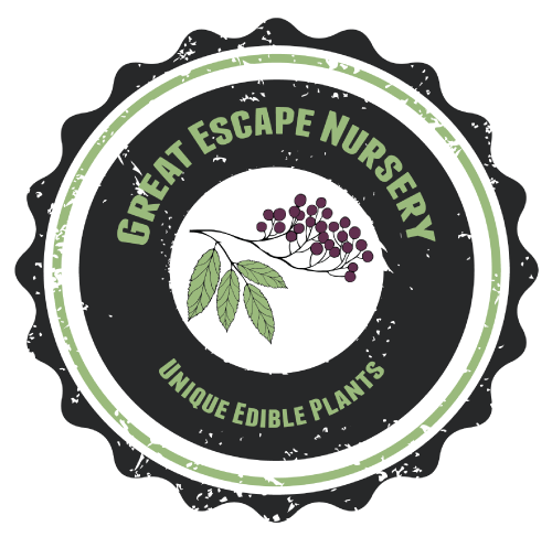 Great Escape Nursery Grand Opening