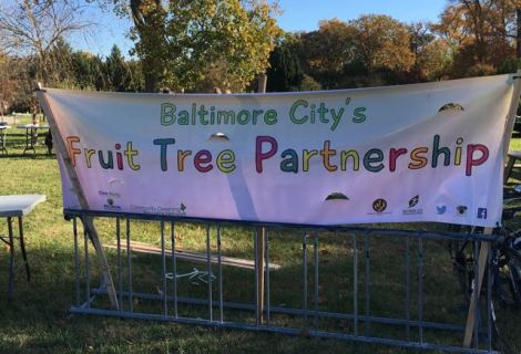 Baltimore City Fruit Tree Partnership Program