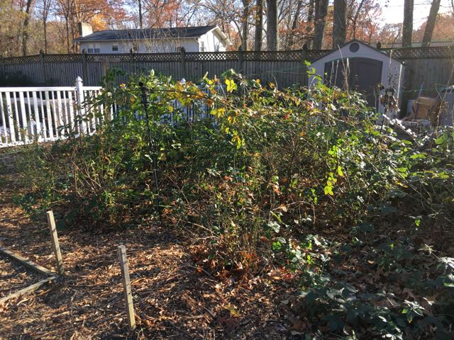 November 2016 Sustainable Homestead Update