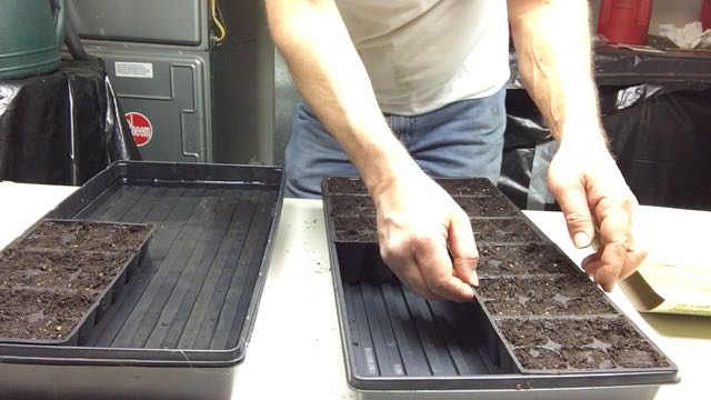 Seed Starting Indoors to Save Money Water