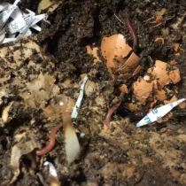Sustainable Homesteading in Maryland Part 3 - Inside Projects - Red Wigglers