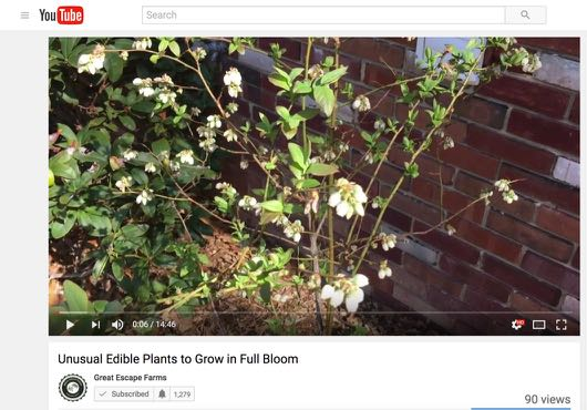 Unusual Edible Plants to Grow in Full Bloom - The Video