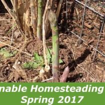 Sustainable Homesteading in WV Spring 2017
