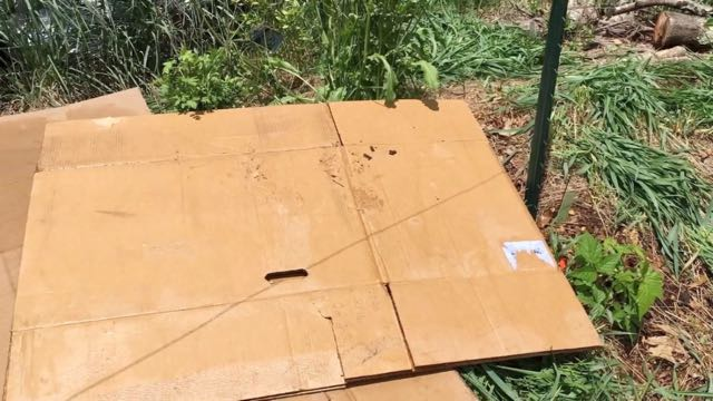 Food Forest Weeding - Cardboard