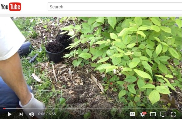 Propagating Raspberries - Video