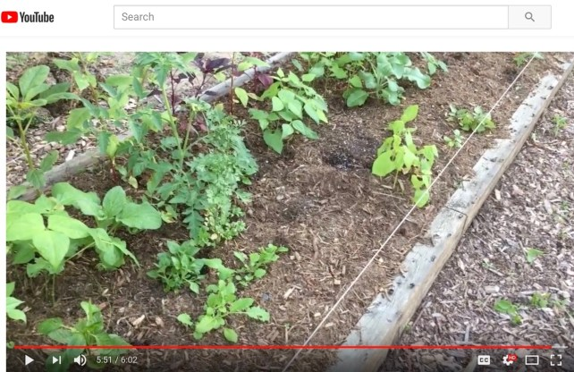 Square Foot Gardening Update YouTube
