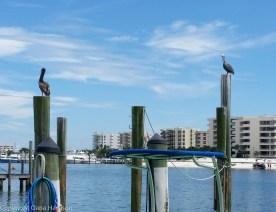 Harbor Village Pelicans