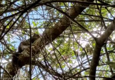 Watercolor, FL - Park squirrel