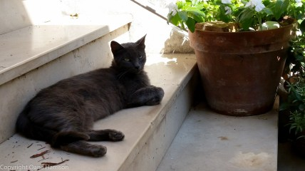 Black cat lounging in Positano