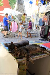 Cats napping, people shopping in Positano