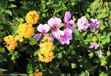 Sorrento flowers