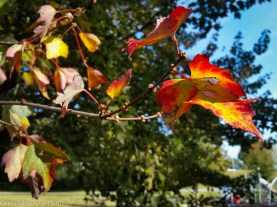 Pretty fall colors in Carl Cowan Park