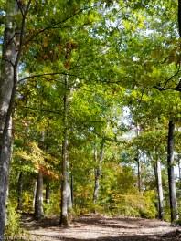 Fall day in Carl Cowan/Admiral Farragut Park