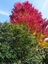 October colors