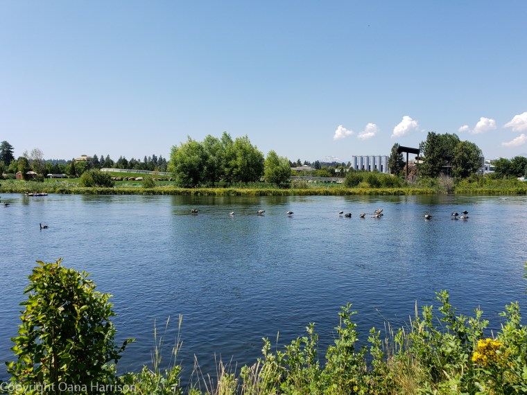 Oregon-Bend-Old-Mill-District-birds