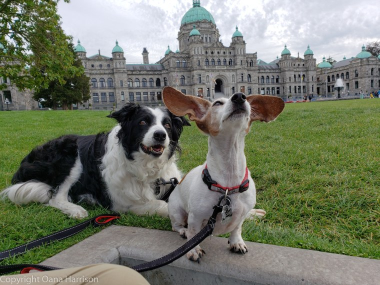 75-Victoria-BC-CA-Parliament-Building-dogs