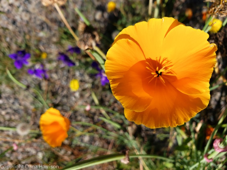 Elwha-Dam-RV-Park-Colorful-Flowers-12