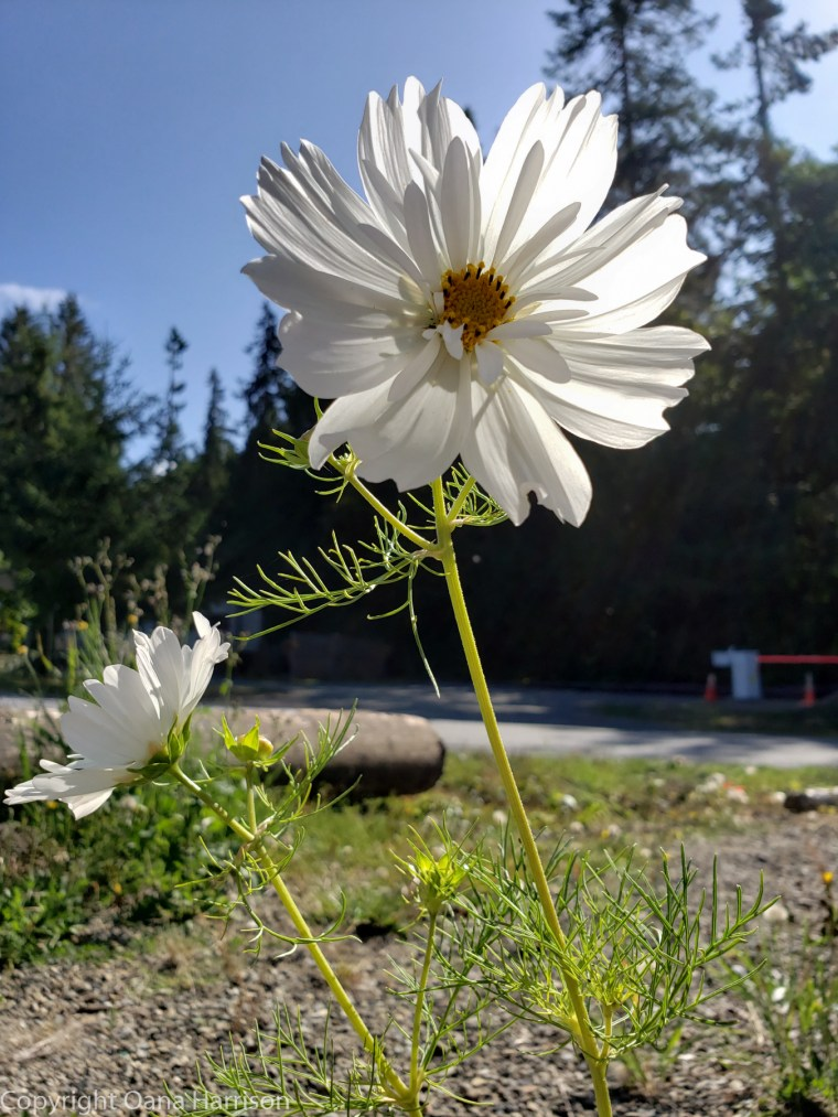 Elwha-Dam-RV-Park-Colorful-Flowers-18