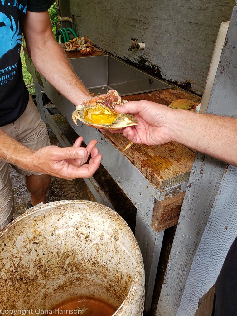 Netarts-Bay-OR-Crabbing-30-Dungeness-crab-butter