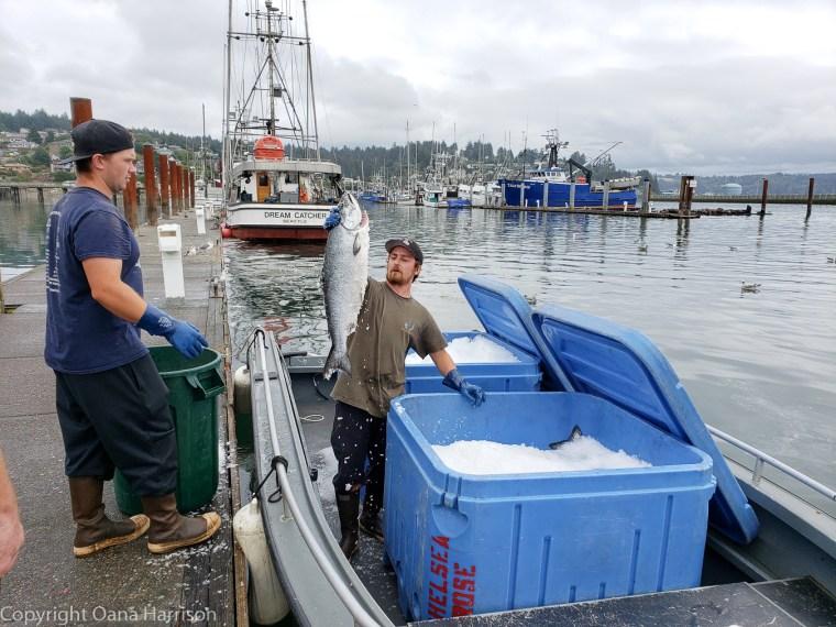 Newport-OR-Chelsea-Rose-man-holding-up-fresh-tuna
